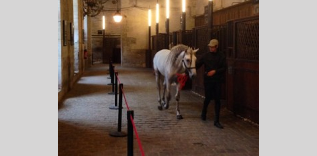 Your Paris Experience - The Equestrian Chateau de Versailles